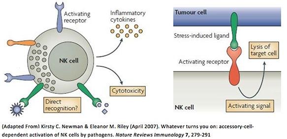 NK cells Lyfe Medical Wellness