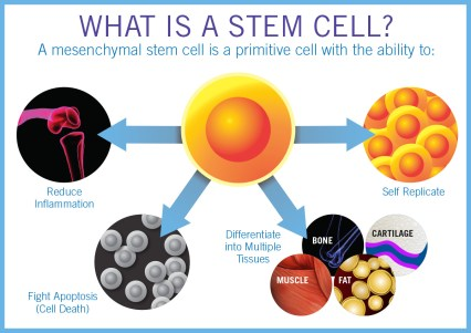 stem cell Lyfe Medical Wellness