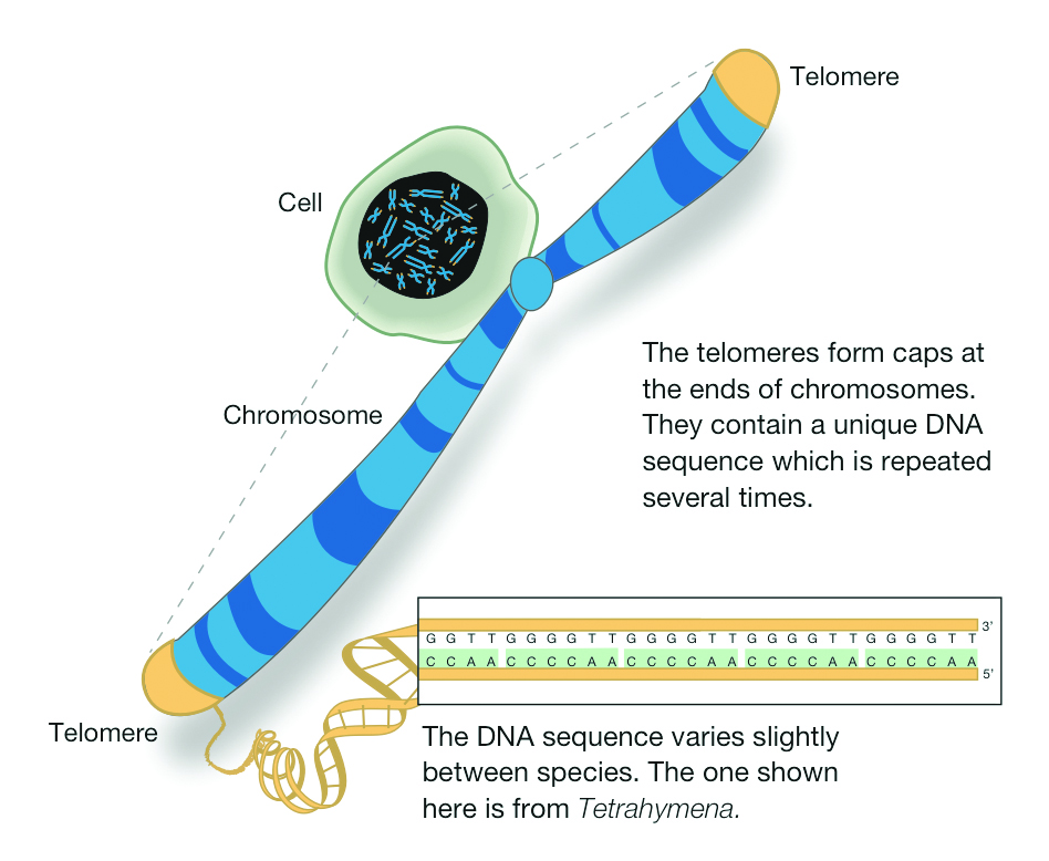 telomere Lyfe Medical Wellness